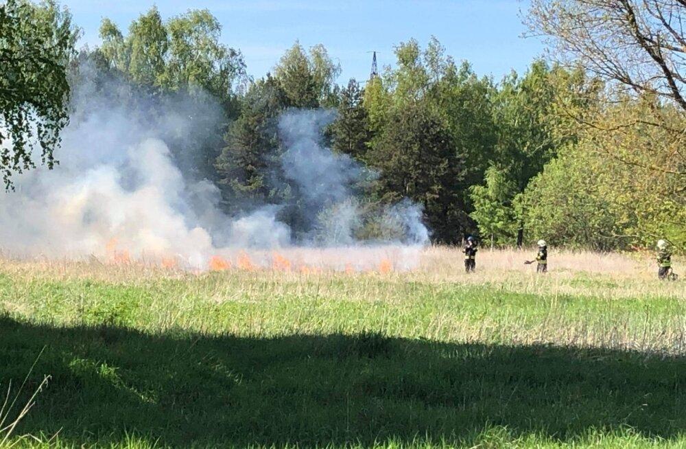 ФОТО: В Таллинне горело поле за старой психбольницей
