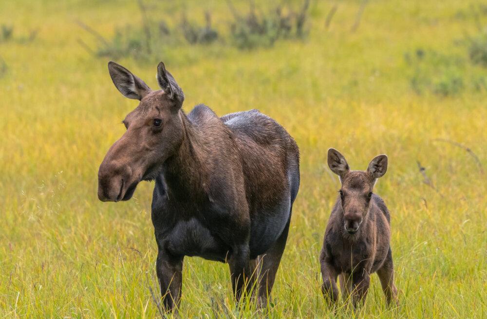 Eestimaa Loomakaitse Liidu avalik pöördumine