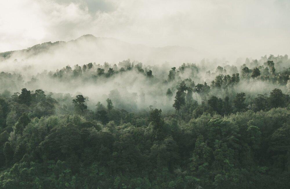 Amazonase tulekahjude valguses levib valeinfo