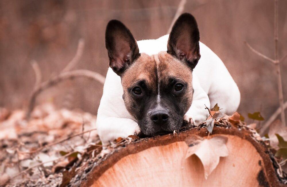 Loomaarst Tiina Toomet: sügis põhjustab lemmikloomade elus tegelikult suurt segadust