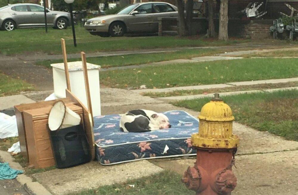 Mahajäetud koer ootas kuu aega omanikke koju tagasi enne, kui ta päästeti