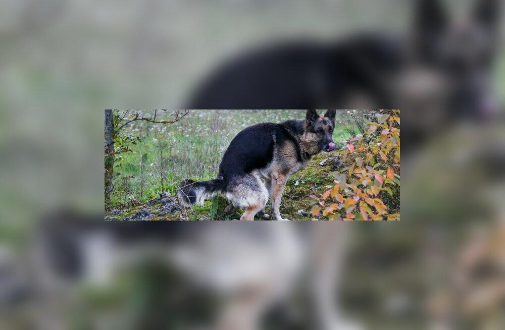 Elo Odres: Koerakaka ja kodanikujulgus
