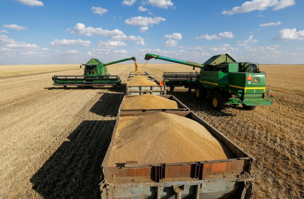 Kliima soojenemine paneb ohtu maailma tähtsaima põllumajanduskultuuri