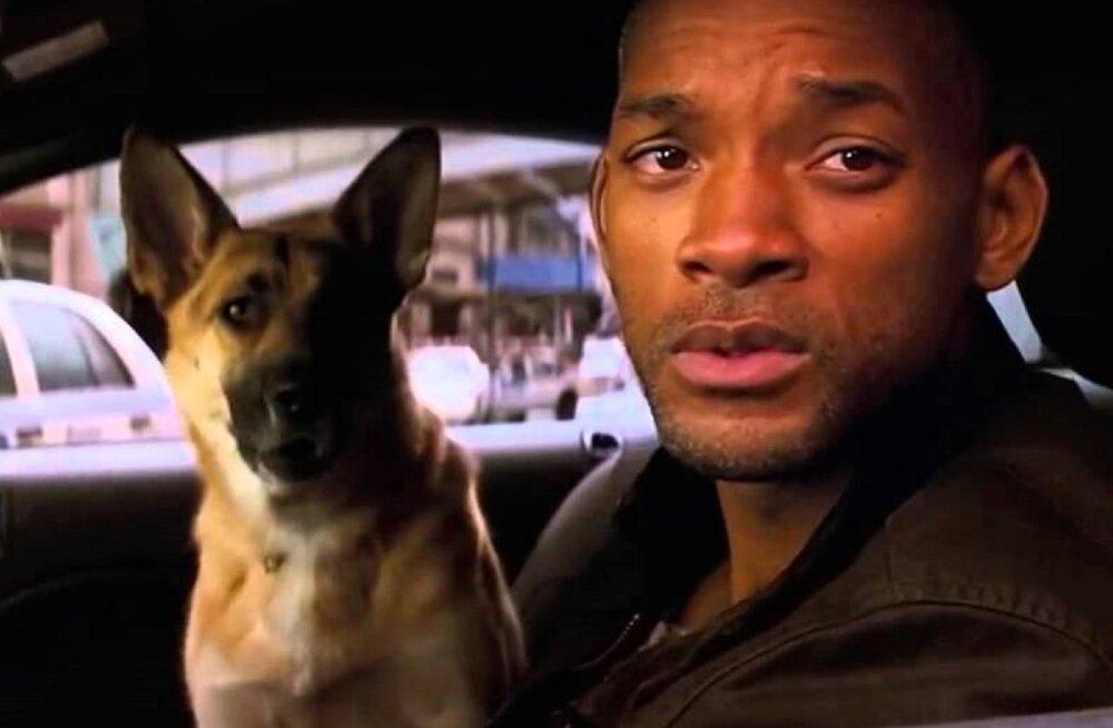"""Kas õuduspõnevikust """"Mina olen legend"""" pärit koera mäletad? Tema nimi on Abbey ja ta on siiani maailma parim koer"""