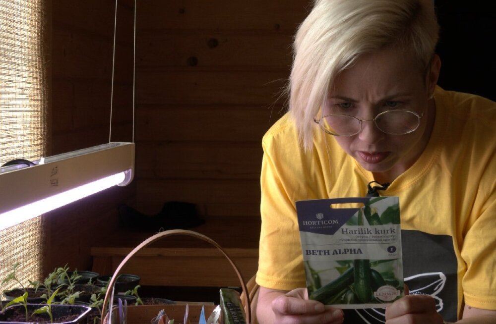 Ettevaatust, ootamatu oht potipõllunduses! Osad seemned sisaldavad väga ohtlikke kemikaale