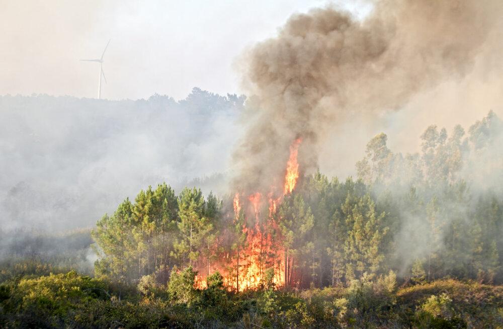 Kuidas sina saad aidata põlevat ja laastatud Amazonase vihmametsa