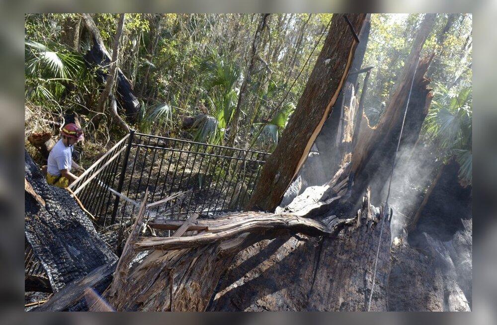 Vanimaid elusolendeid Maal hukkus tulekahjus