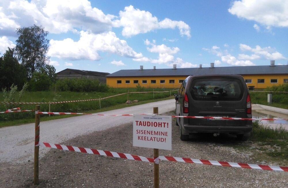 FOTOD: Pärnumaal tuvastati sigade Aafrika katk, 3400 siga hukatakse