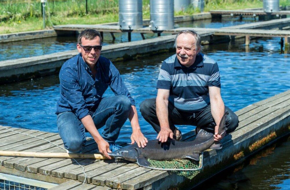 Martin ja Aarne Liiv toimetavad edukalt Härjanurme kalatalus