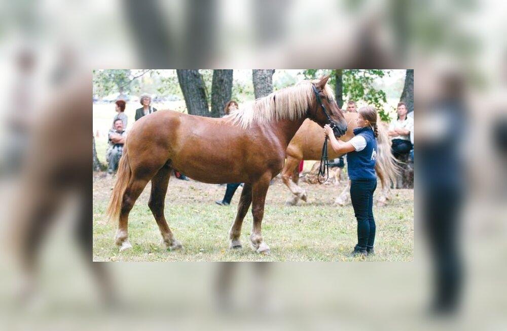 На Таллиннском ипподроме состоится забег лошадей эстонской породы