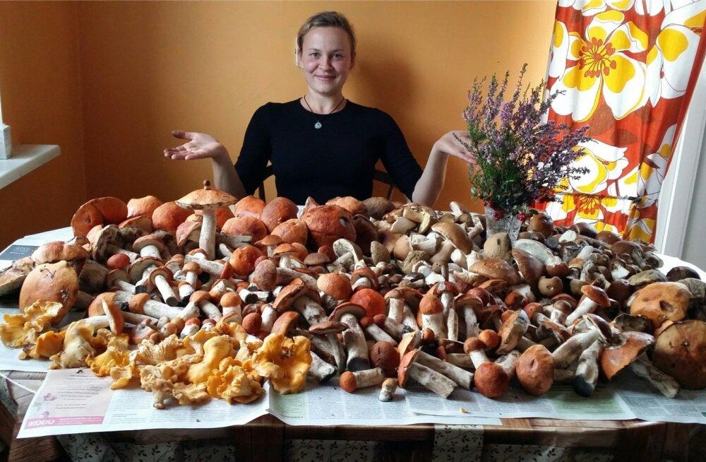 Geili Tuuling käis oma tänavusel esimesel seenretkel Saaremaal Reeküla metsades ja sai koguse, mida võib naljaga nimetada lauatäieks.