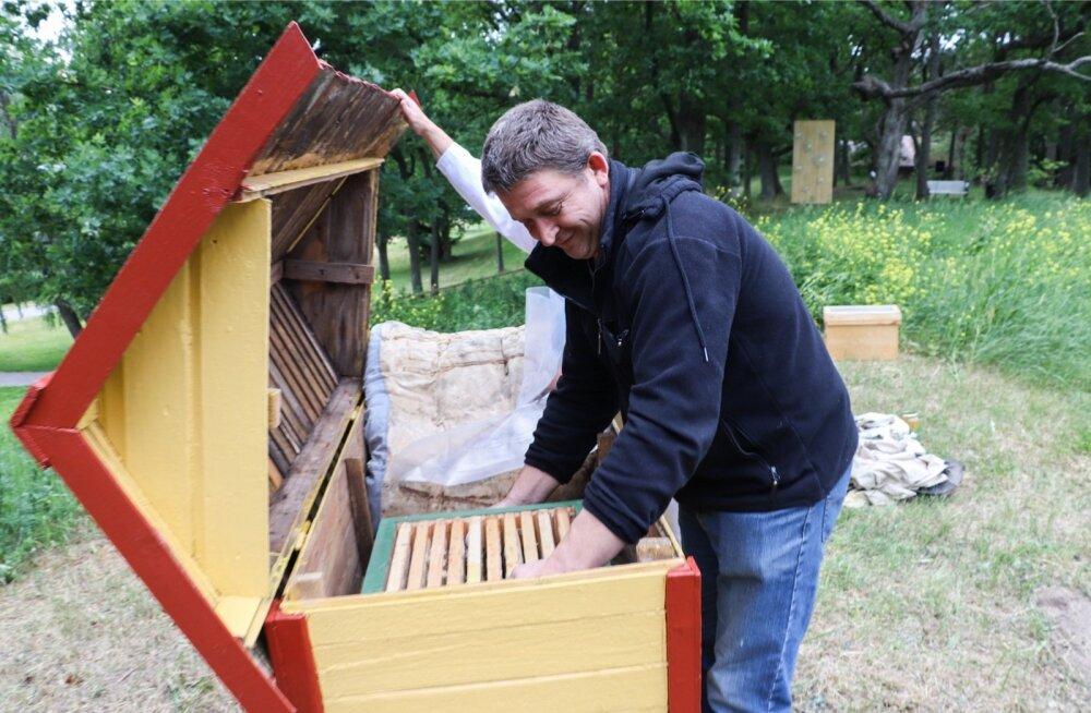 Kuigi mesilased on üldjoontes rahulikud, ei tasuks neid niisama torkima minna. Mesitarude pidajal pole aga pääsu ja aeg-ajalt tuleb käed tarusse pista.
