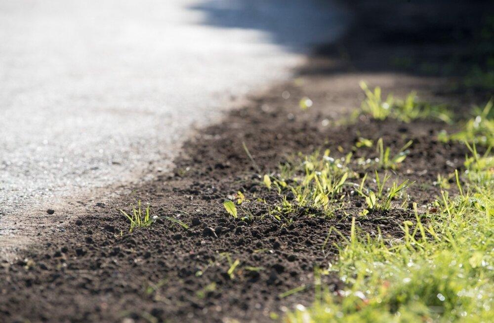 Teadlased: Eestimaa muld on üllatavalt liigirikas
