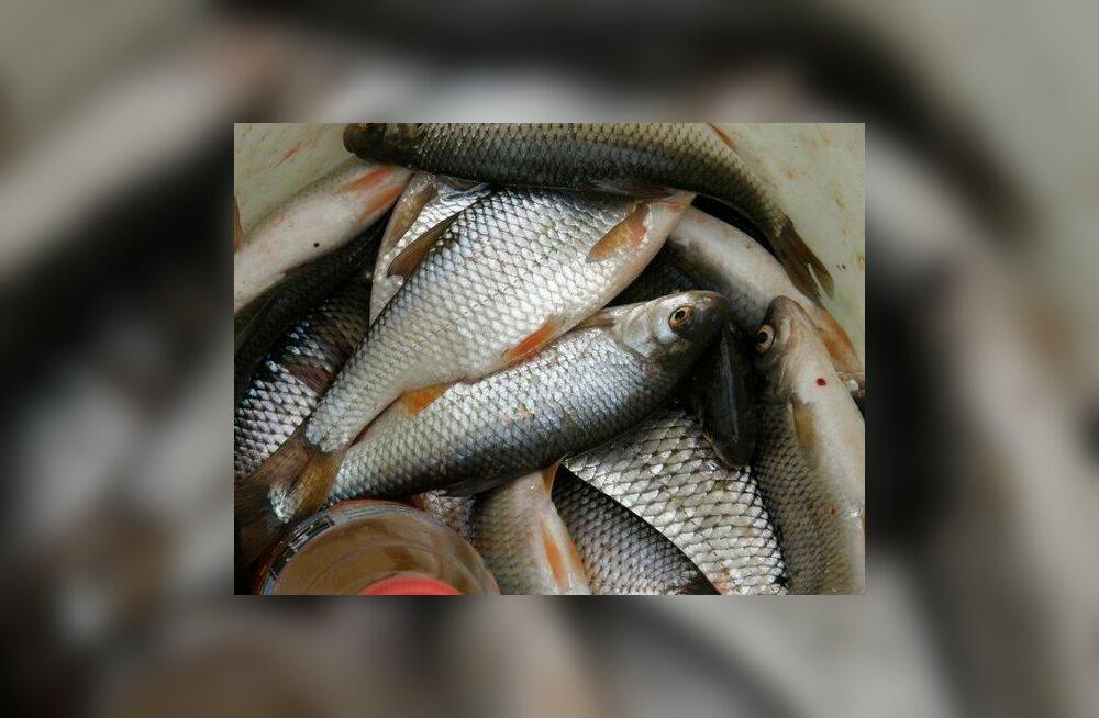 PRIAst saab taotleda toetust kalalaevade moderniseerimiseks