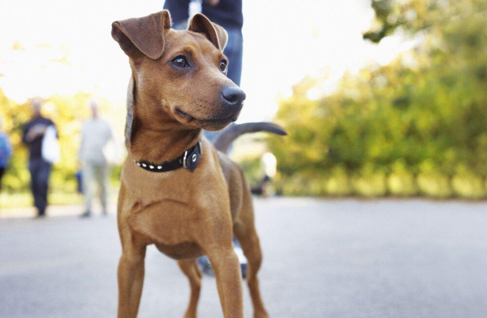 Kuidas aidata koeral kaalus alla võtta?