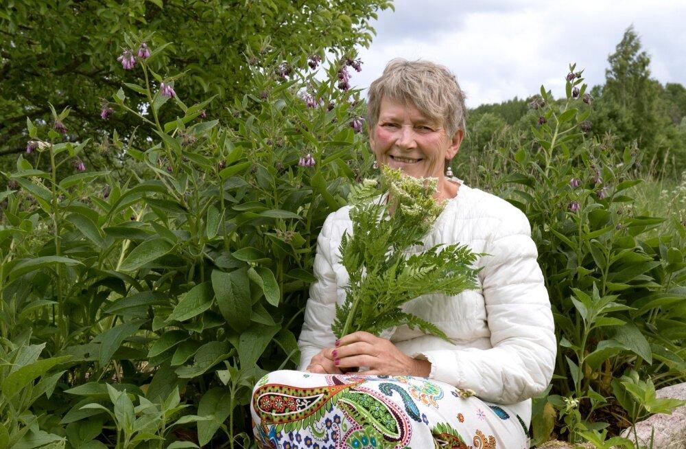 """""""Meid ümbritseb taimede imeline vägi,"""" kinnitab Mercedes Merimaa oma koduaeda kogutud ravimtaimede keskel – käes mesiputk, taustal varemerohi."""