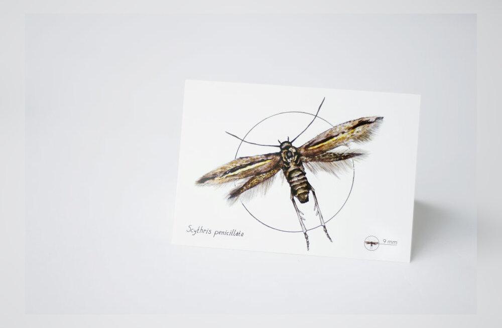 Haruldane liblikas sai eestikeelse nime