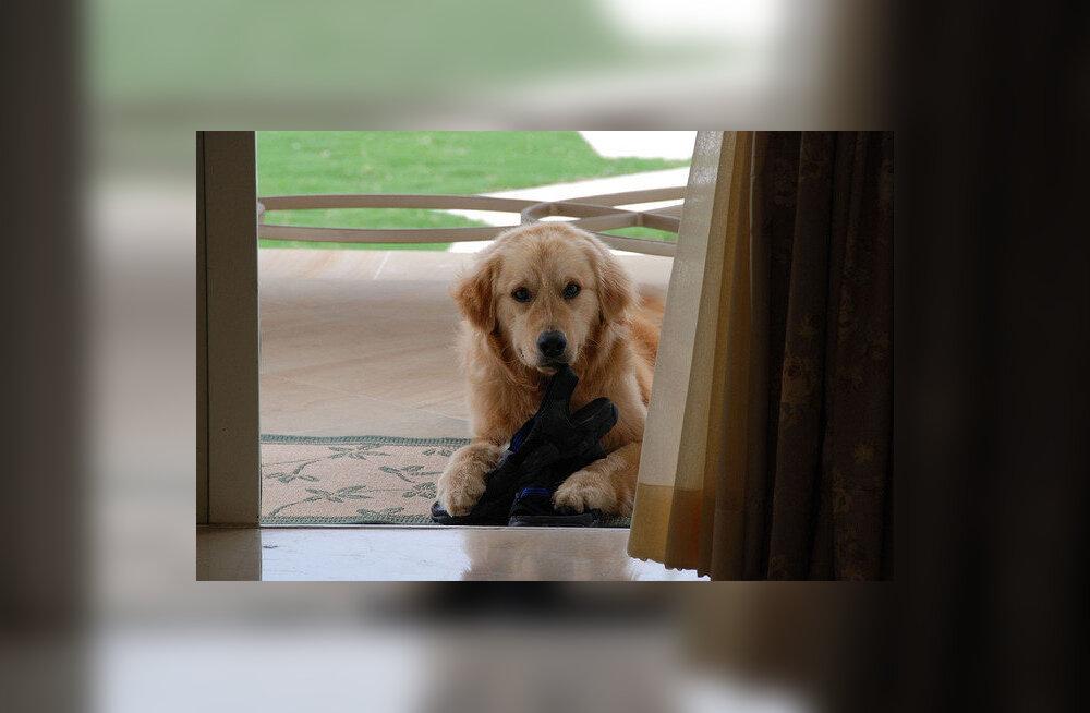 Loomaarst: lemmiklooma võttes tasub elukeskkond kriitilise pilguga üle vaadata
