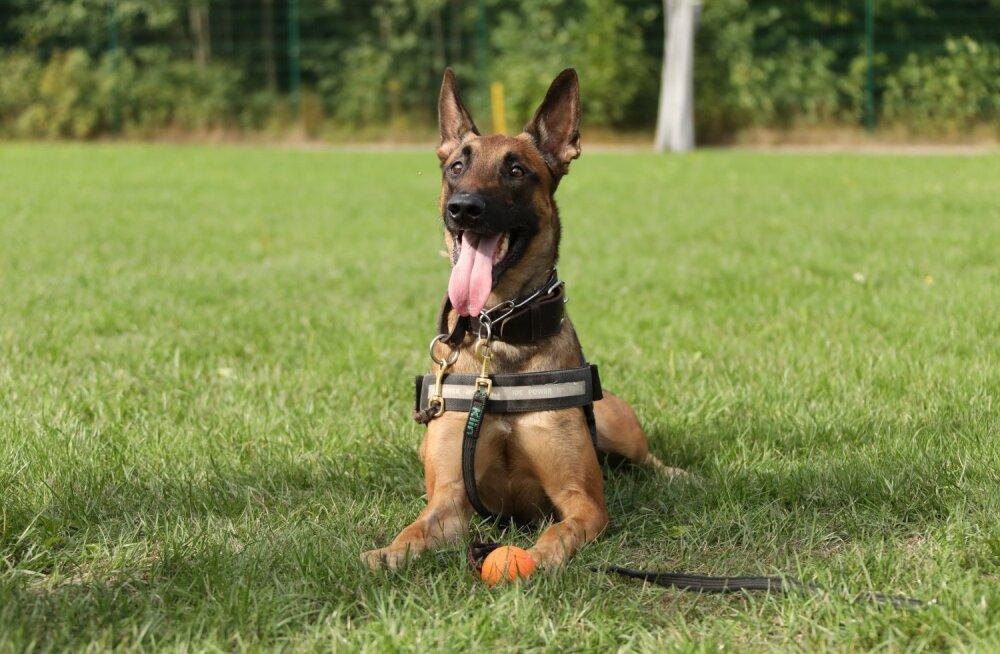 ФОТО | Спасителем женщины стал полицейский пес Ведур