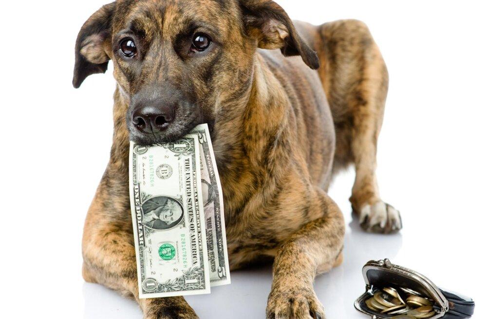 Loomaomanikud üllatusid, kui palju lemmiku peale tegelikult kulub: kas sina oled igakuistest kulutustest teadlik?