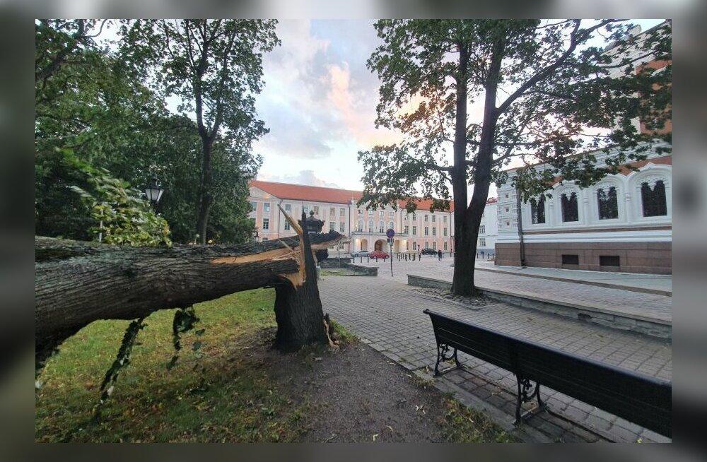 ФОТО | Шторм повалил массивное дерево на Тоомпеа