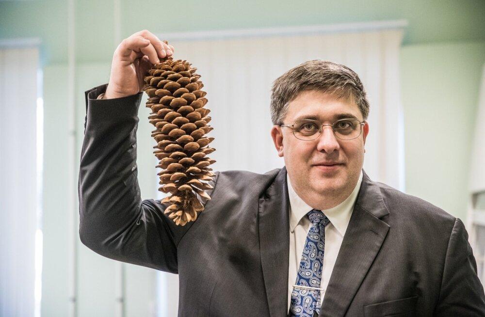 Ivar Sibul näitab suhkrumänni käbi, mis on tal sageli kaasas, kui koolides või lasteaedades metsatarkusi jagamas käib.