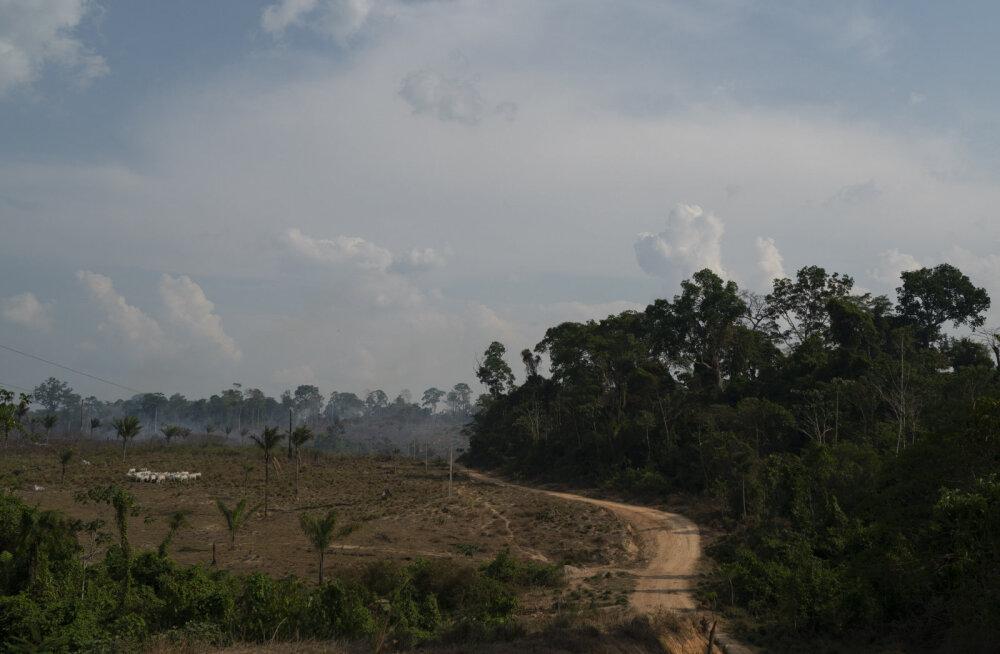Вырубка лесов в Амазонии увеличилась почти вдвое, число пожаров бьет рекорды