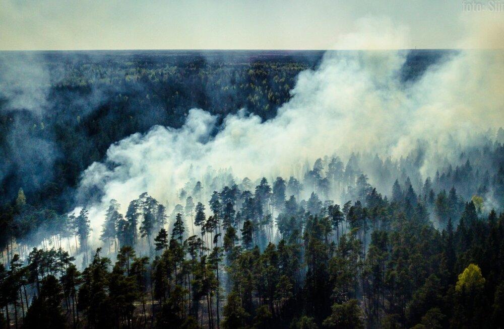 Rootsi annab 11 miljonit eurot metsapõlengute kahjude hüvitamiseks