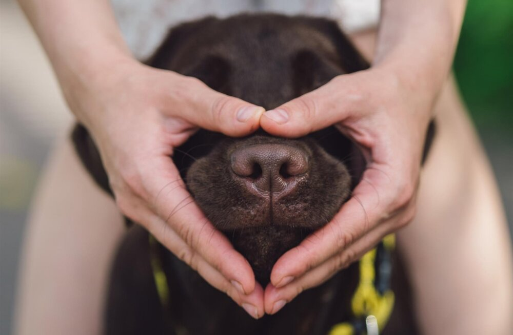 Oled juba järele proovinud? Koeraomanike seas kogub populaarsust põnev koerte nutikust kontrolliv test