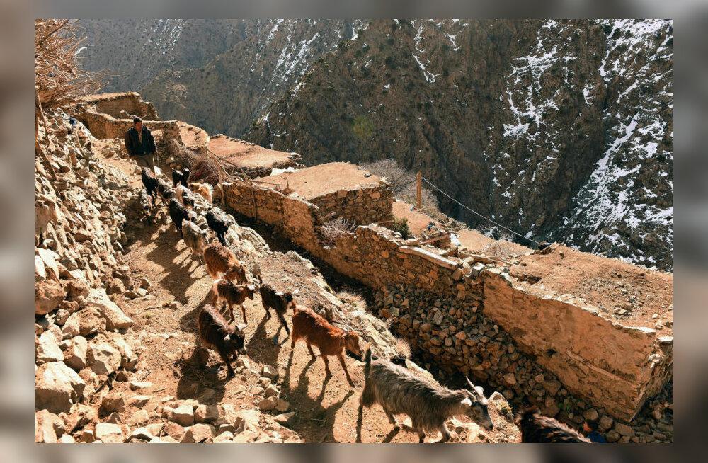 В горах Марокко зарезали двух скандинавских туристок
