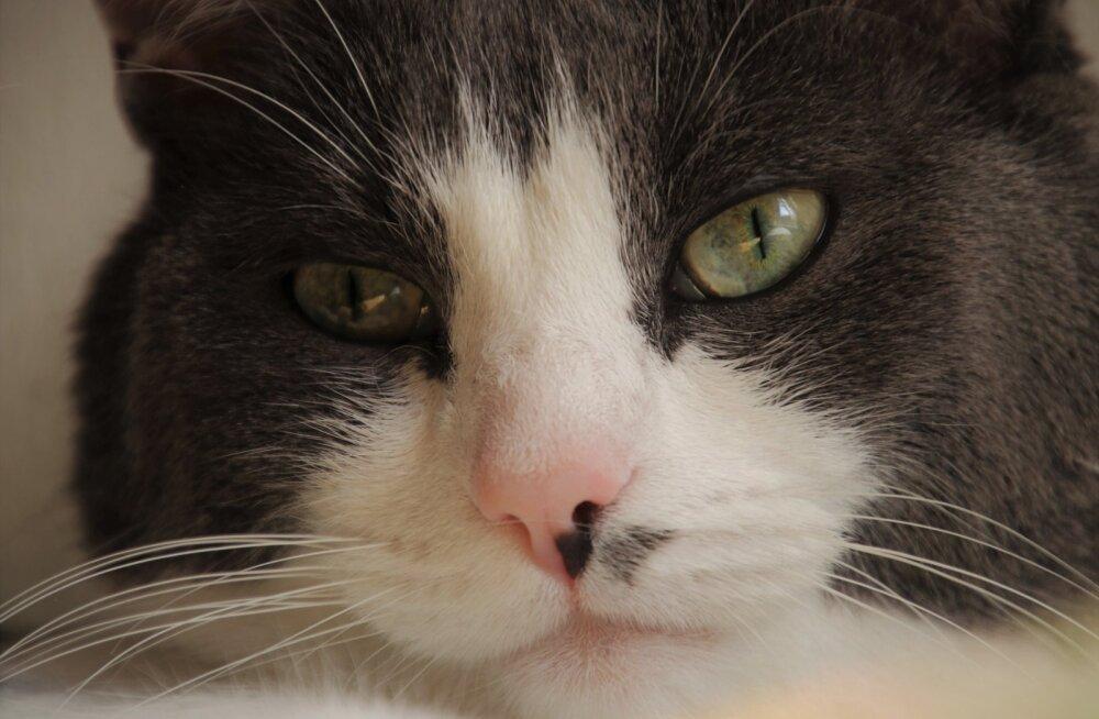 Aadu, Masoni ja Frida lugu | teistest erinev toit vangistas kassid puuridesse