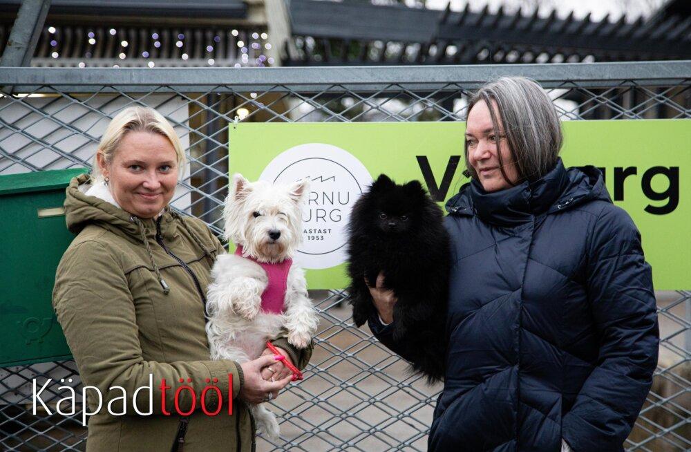 KÄPAD TÖÖL | Pärnu turu tööd koordineerivad must ja valge koer