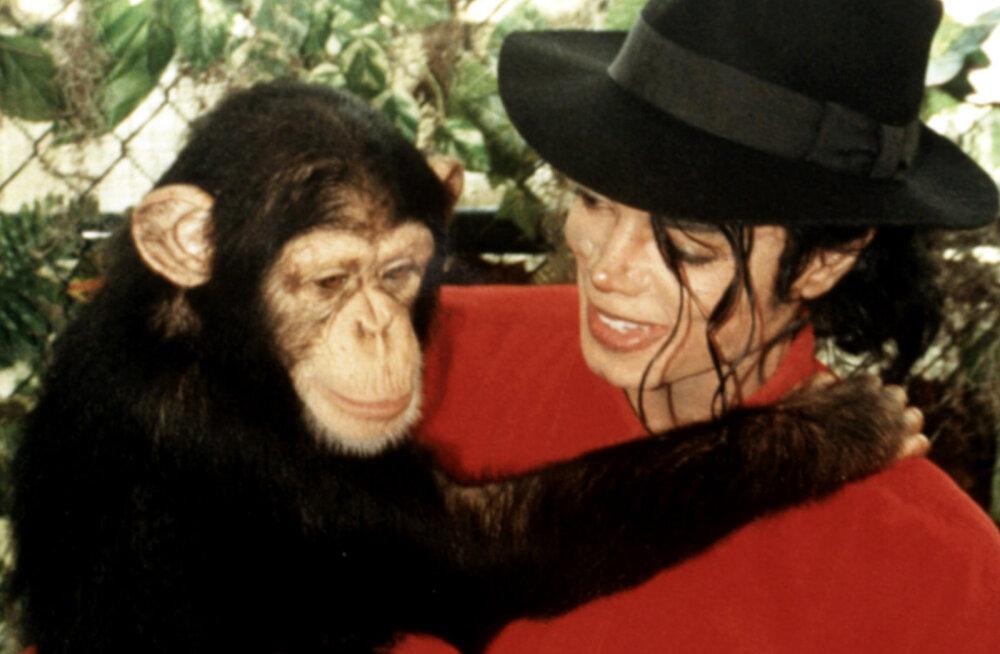 ANDEKAS PÄRDIK: Michael Jacksoni šimpans kogus kunstimüügiga ahvide varjupaigale raha