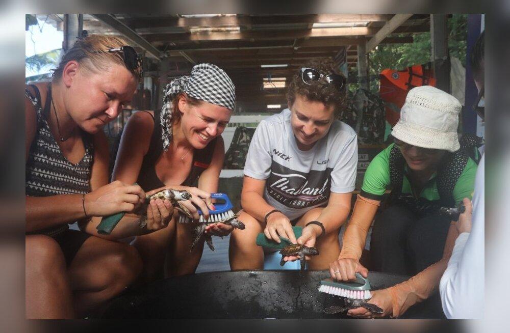 ФОТО DELFI. Необычный Таиланд: выращивание кораллов, спасение черепах и священные пещеры