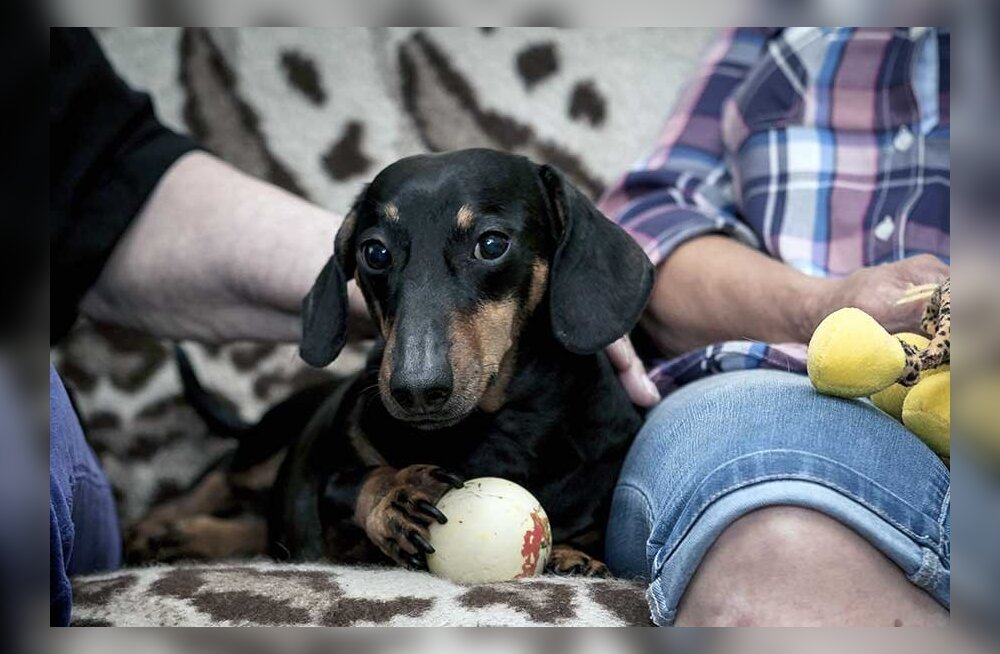 Конфликт между собаками и хозяевами: кто кого покусал?