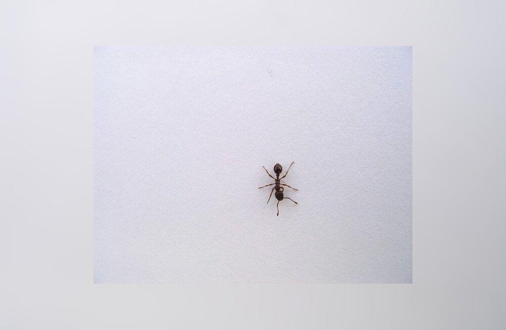 Foto: MorgueFile, sipelgas