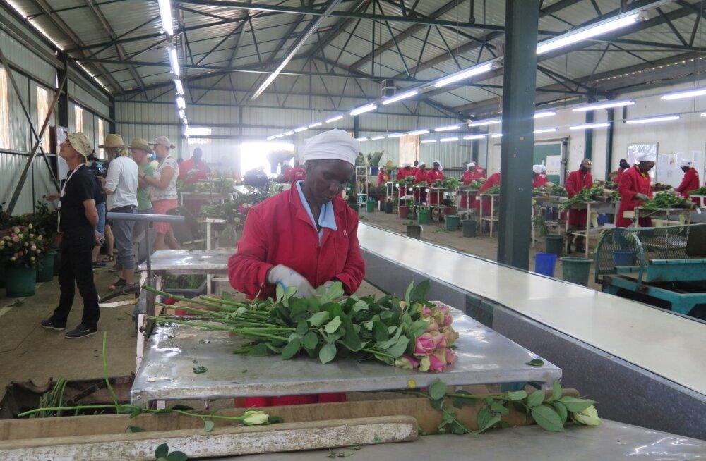 Keenia roosikasvanduses.