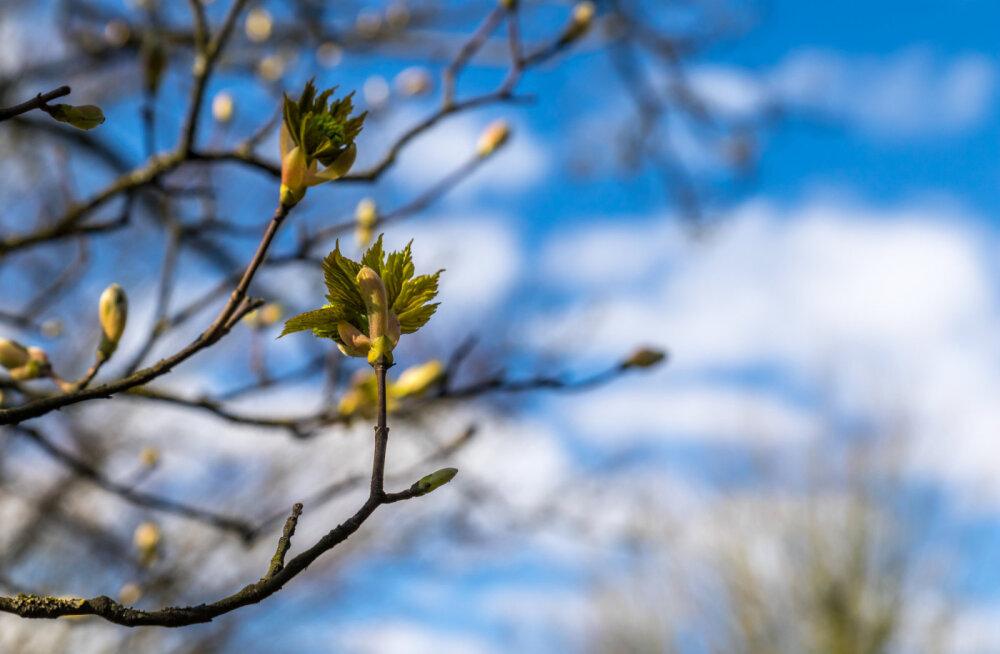 Täna on pendipäev - ära too metsast puid ega tööta terariistadega