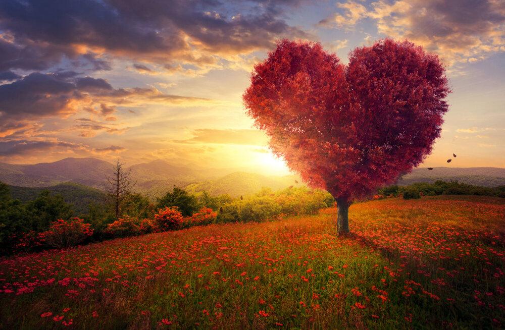 Alkeemia lugemisnurk | Tagasi armastuse juurde