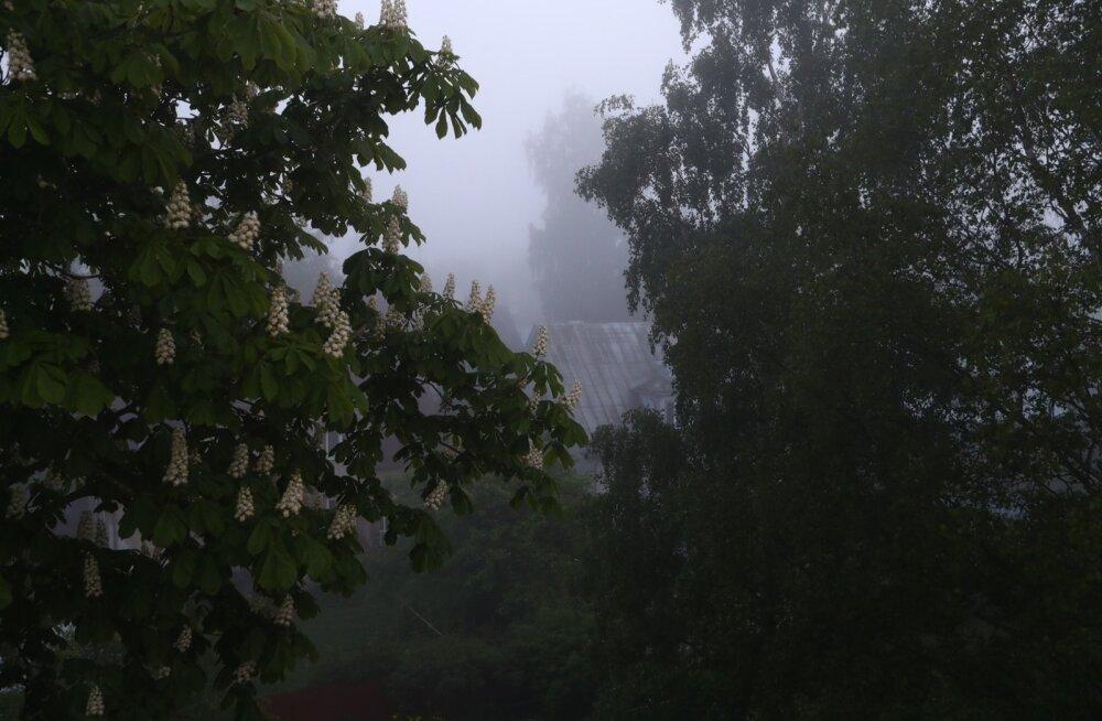 Veeauru roll atmosfääris on kahepidine: aur iseenesest on soojendav kasvuhoonegaas, kuid pilvetilkadeks kondenseerunud vesi peegeldab päikesekiirgust, põhjustades jahtumist.