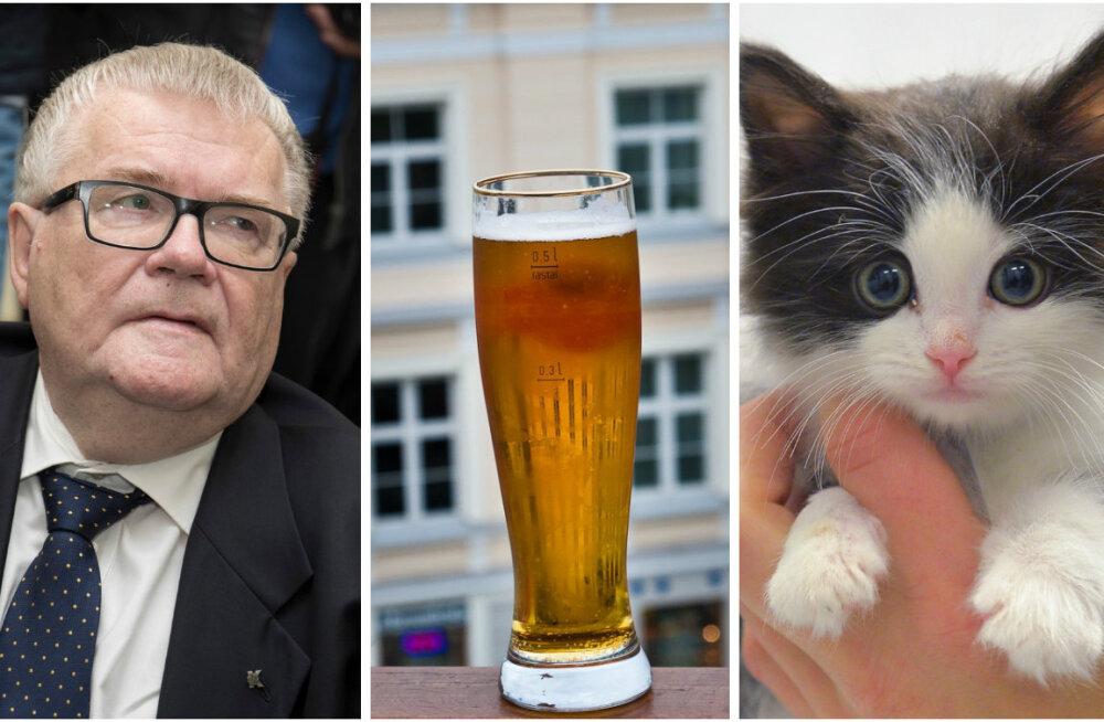 ГЛАВНОЕ ЗА ДЕНЬ: Подробности дела Сависаара, растущие акцизы на алкоголь и акция Delfi в пользу животных