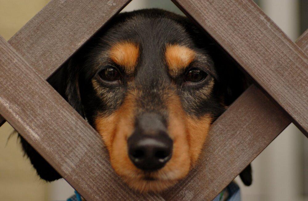 Hämmastavad asjad, mida ainult koerad näha või tajuda suudavad