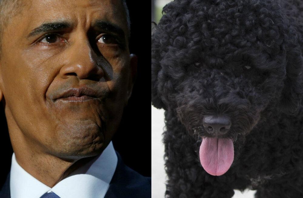 Külaskäik, mida jääb meenutama inetu arm: Barack Obama koer hammustas külla tulnud peretuttavat