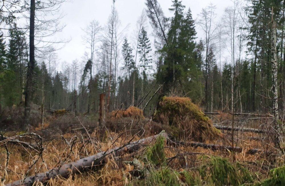 Üraskikahjustused metsas