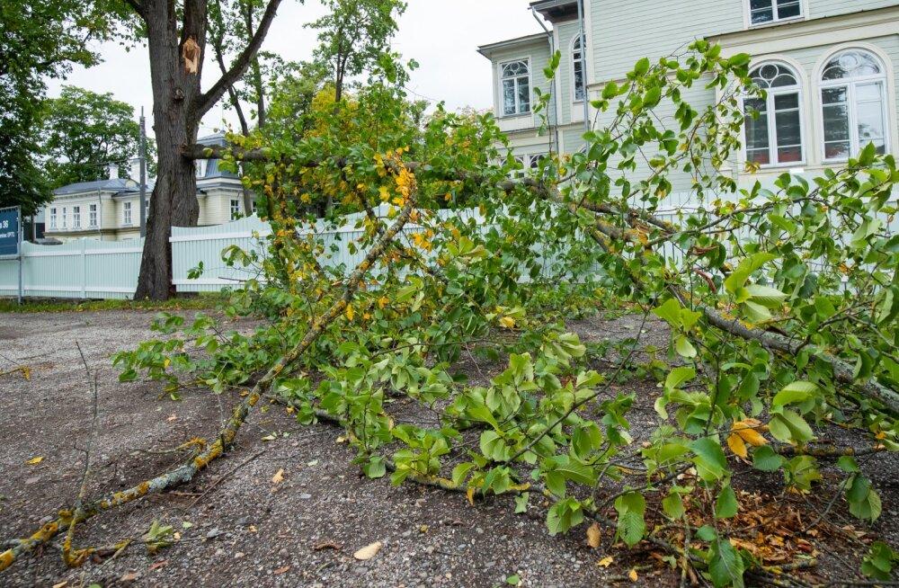 Murdunud puud Kadriorus 17.09.2020