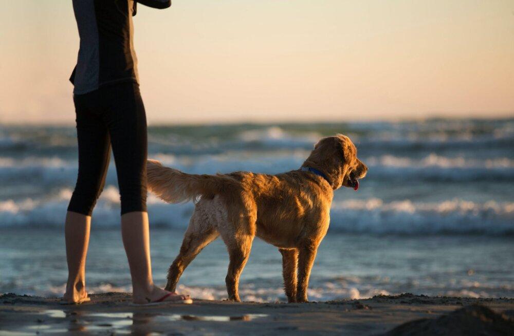 Что чаще всего теряют на эстонских пляжах? ТОП-5 вещей, наличие которых стоит проверить перед уходом