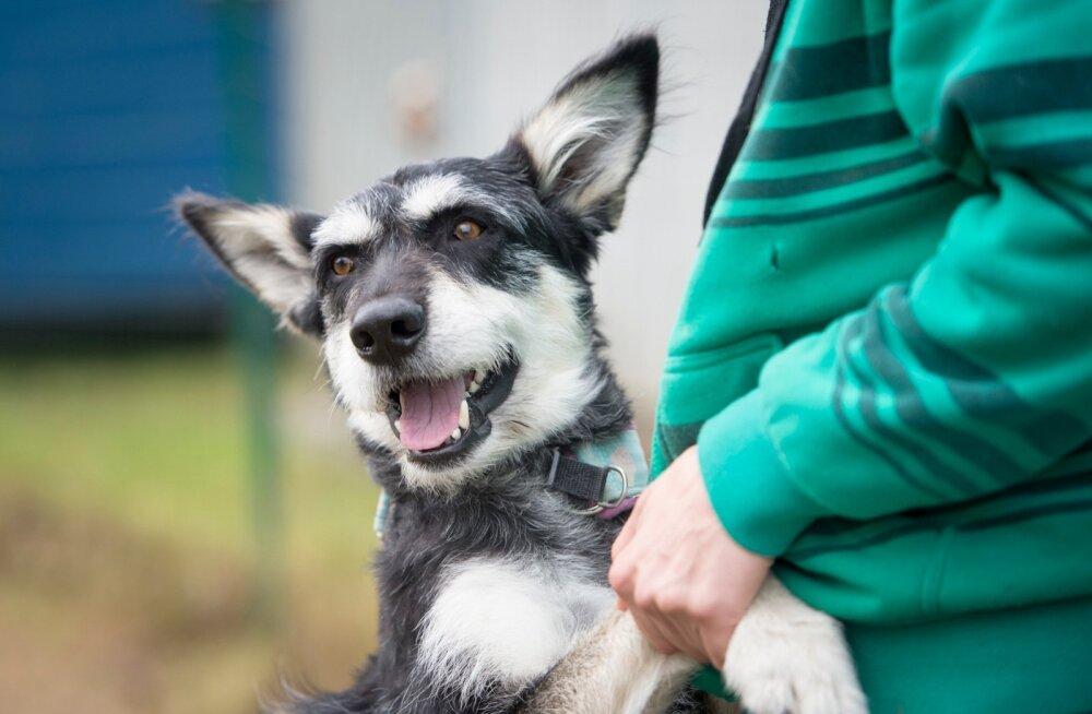 Pärnu koerte varjupaik