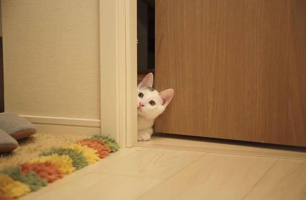 FOTO | Kurioosum: Raasiku valla perekond avastas toast ühtäkki täiesti võõra kassi!