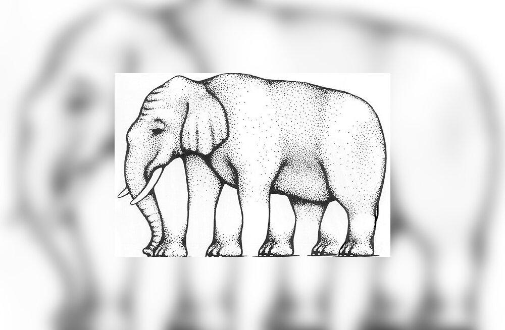 INTERNET ON SEGADUSES: Kui palju jalgu on elevandil?