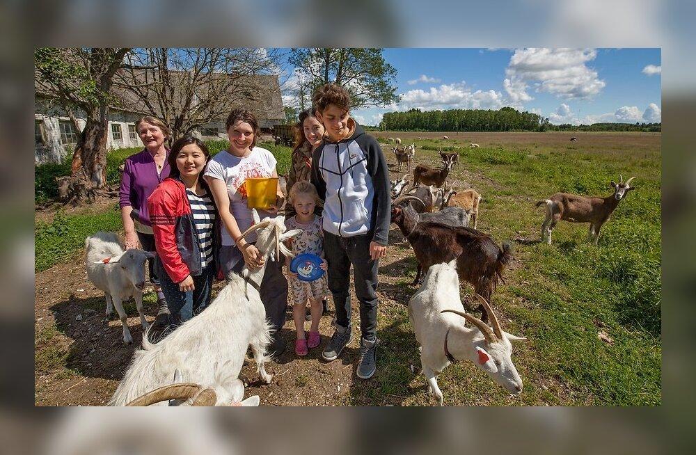 ФОТО: Сотни иностранцев со всего мира приезжают бесплатно работать на эстонских хуторах